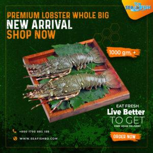 Premium Green Lobster Big Whole Size 1000 gm. 1 pcs.